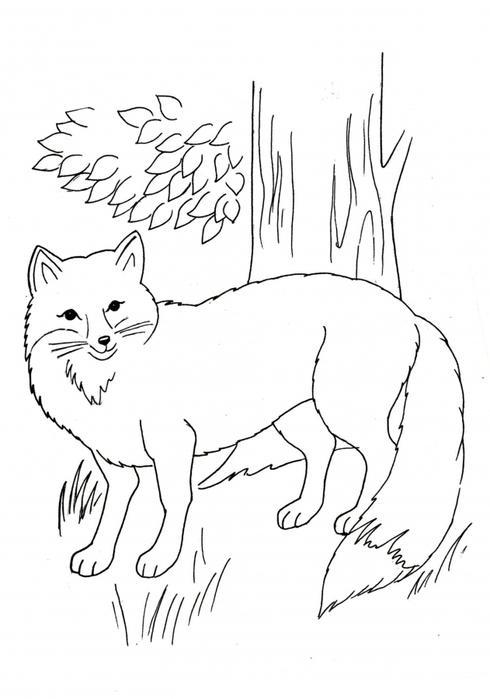 Учим животных раскраски, лиса
