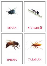 Муха, муравей, пчела, таракан