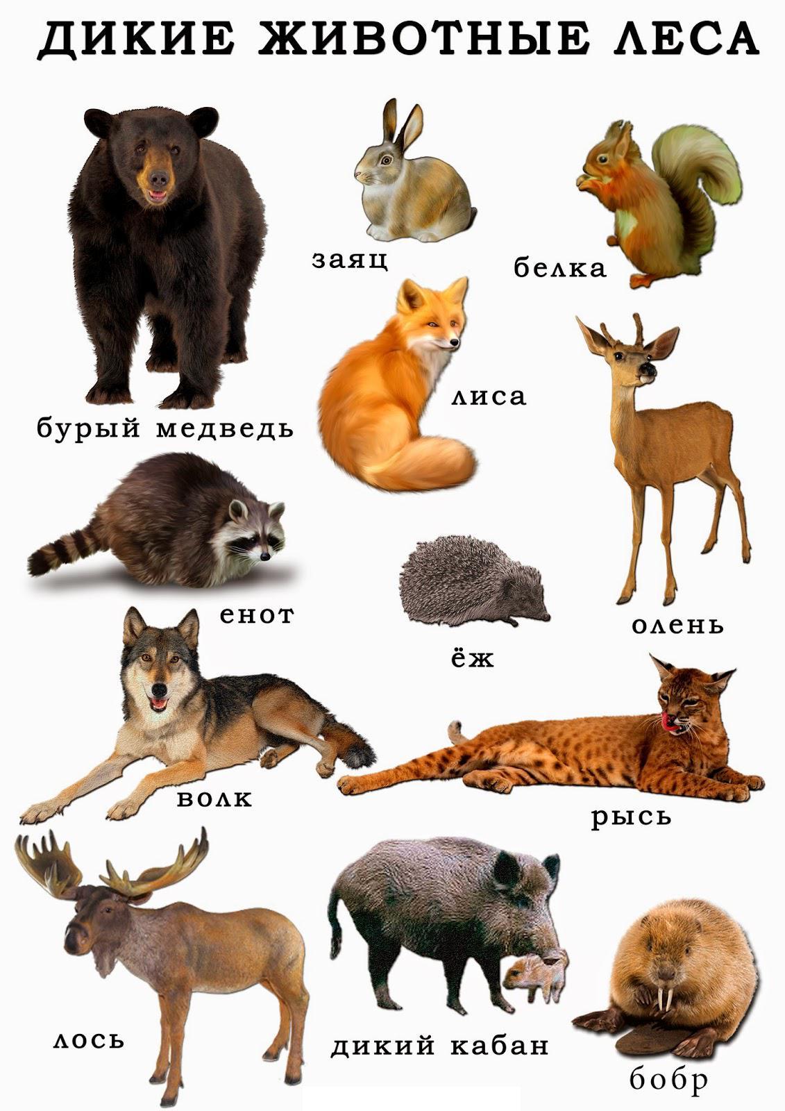 Карточки дикие животные леса, олень, енот, рысь