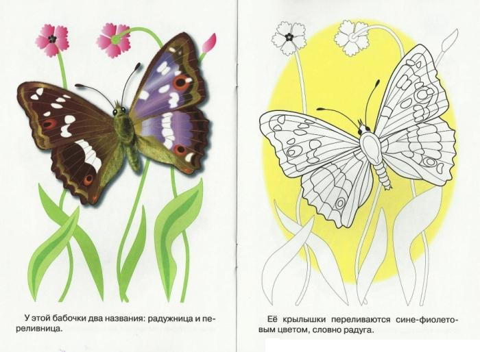 Раскрась по образцу, бабочка на цветочке