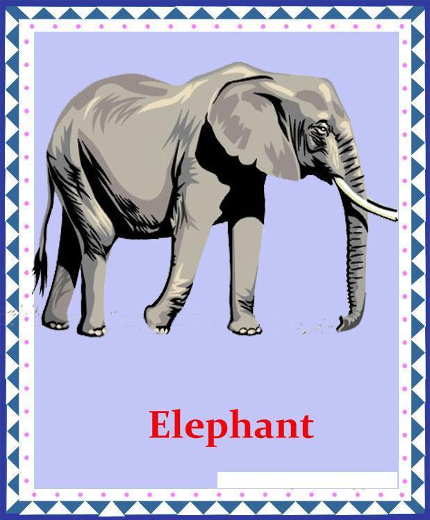 Слон на английском