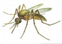 Карточки насекомые