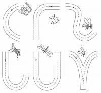 Обведи пути насекомых